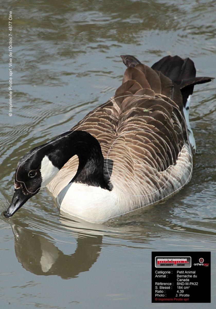 2D - Terč - Kanadská husa