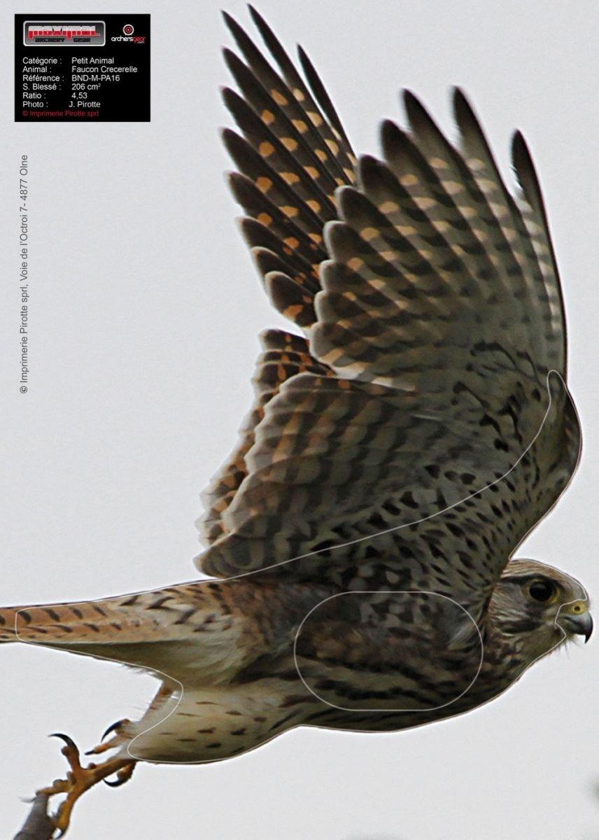2D - Terč - Letící sokol